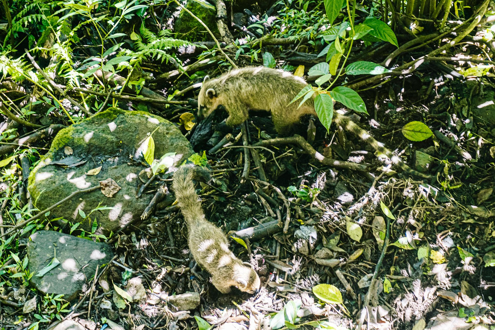 Nationale parken Argentinie Iguazu