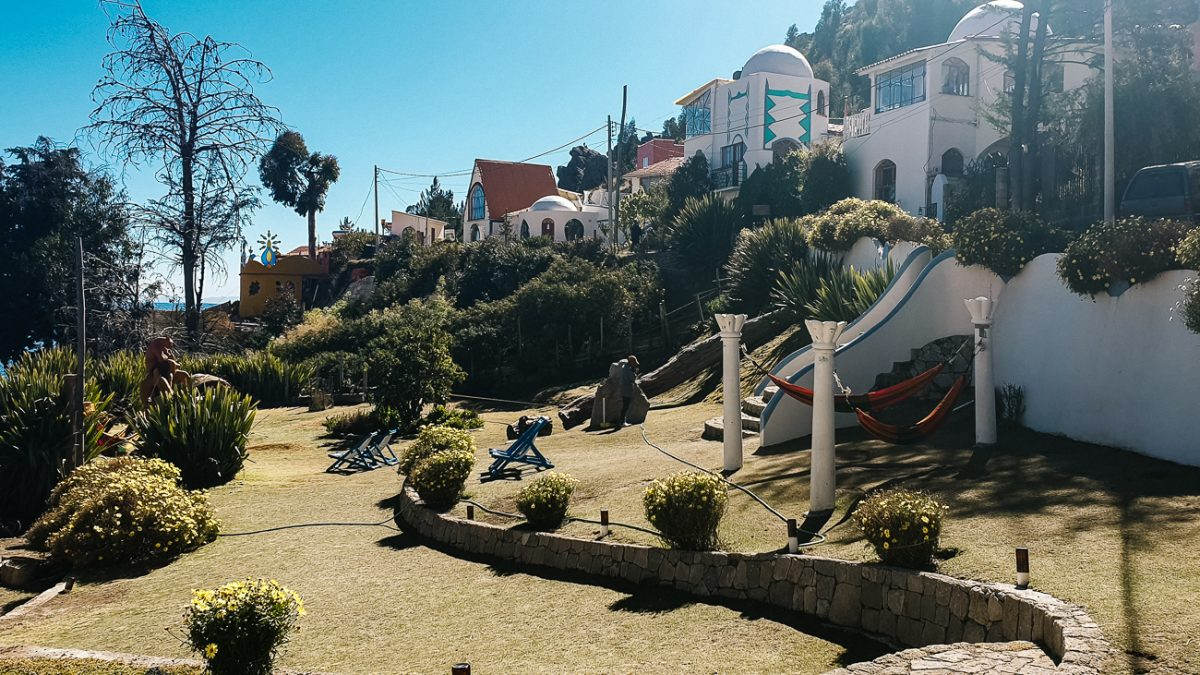 alpacas in the garden of La cupula in Copacabana bolivia