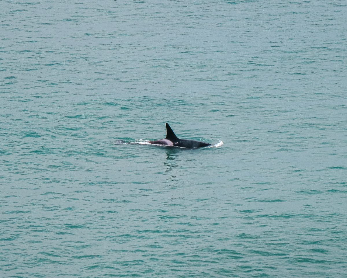Things to do in Puerto Madryn   orca