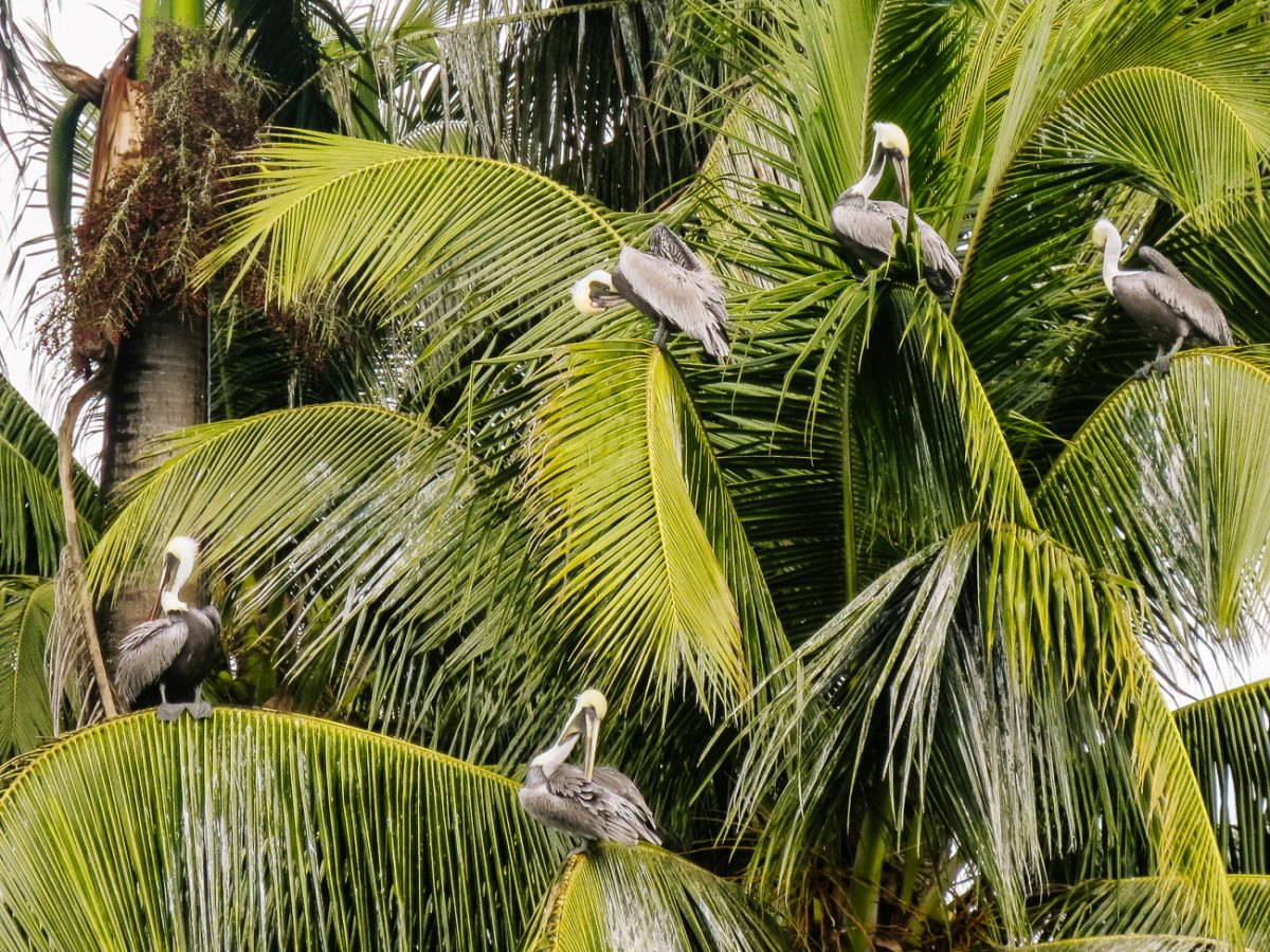 things to do in Rio Dulce Livingston boat trip