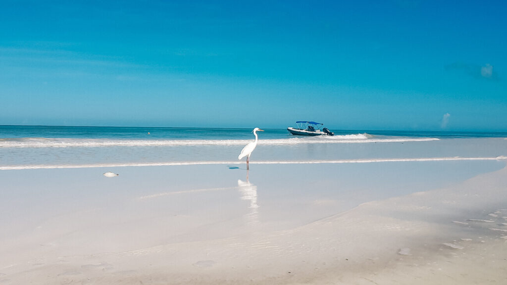 birds on the beautiful beach of Isla Holbox, one of the best beaches to visit during your trip to Mexico