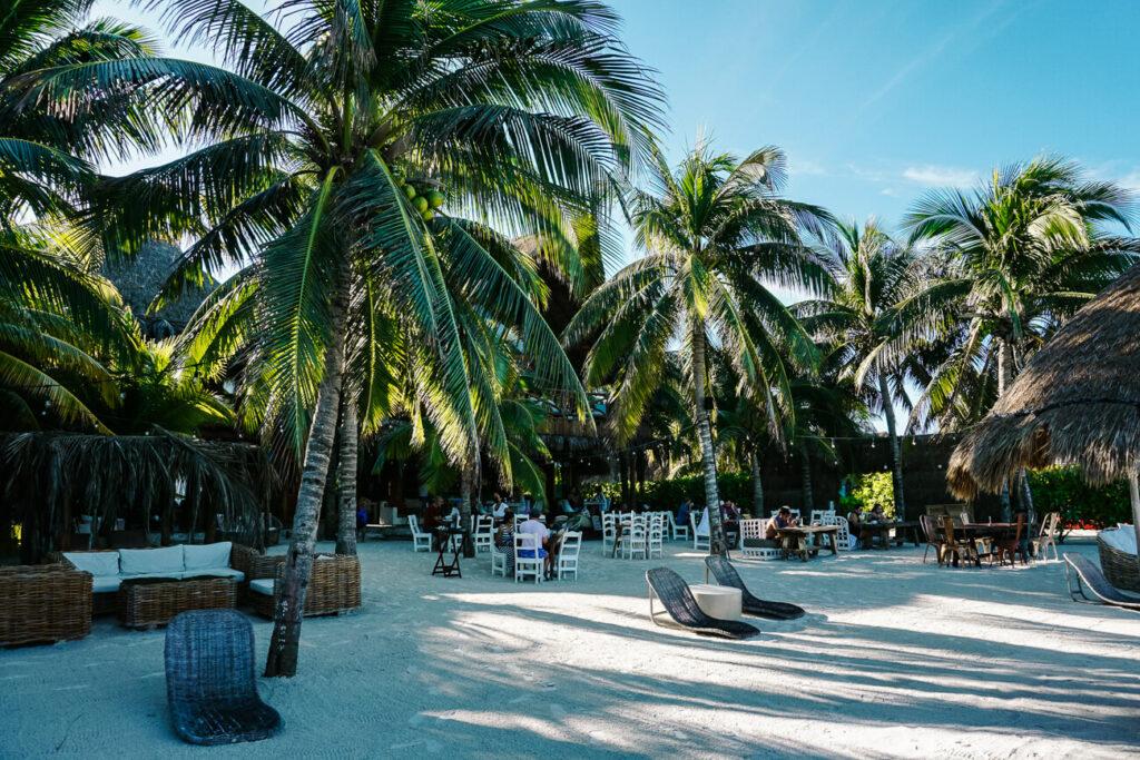 beach with palms at isla de holbox