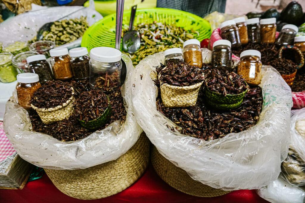 grasshoppers, a local snack in Oaxaca