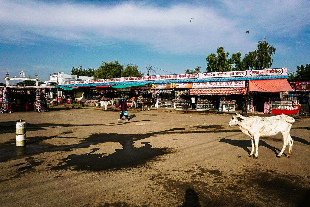 koe in straten van Deshnok
