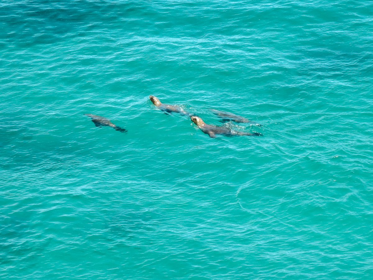 Things to do in Puerto Madryn | snorkeling with sea lions