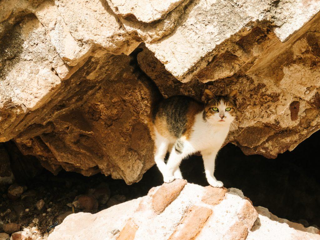 kat bij ruïnes in Guatemala