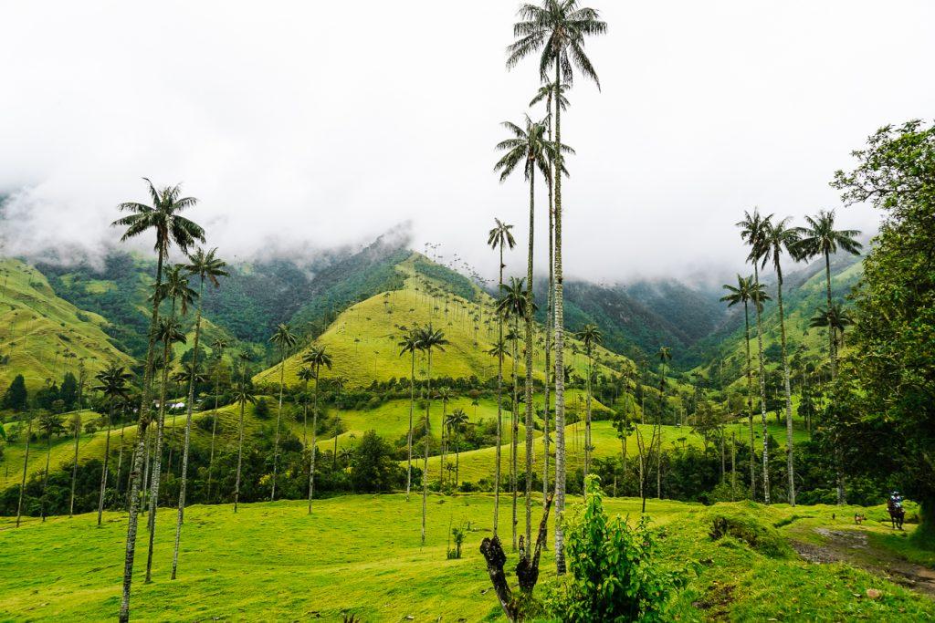 alle de Cocora | een van de mooiste plekken in Colombia