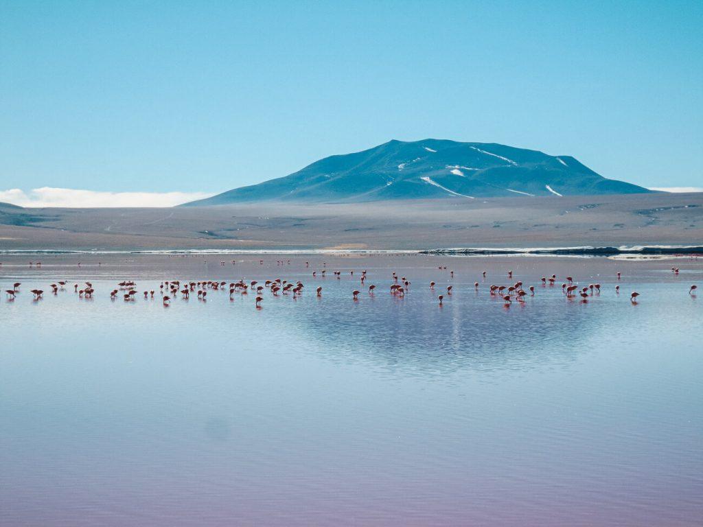 Bolivia Lagoons