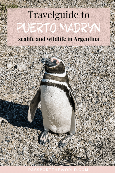What to do in Puerto Madryn pin