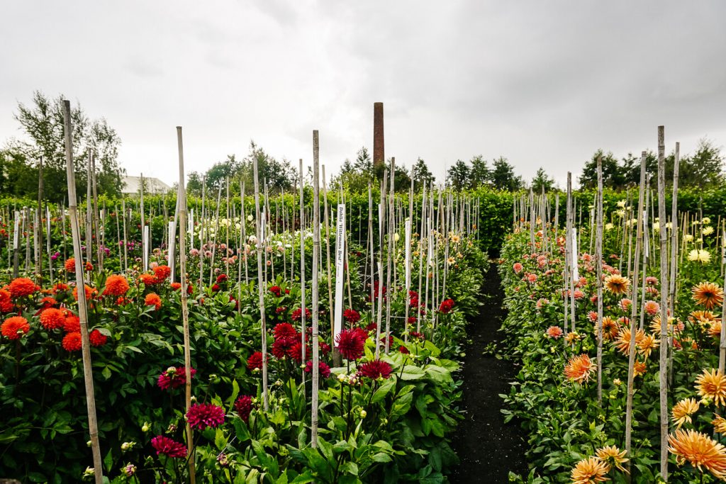 best things to do in Aalsmeer | visit the historical garden to see many flowers
