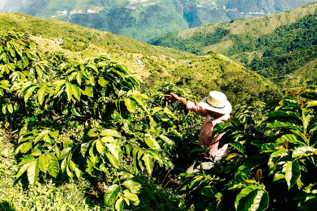 koffie plantages in Colombia | de koffie driehoek is een van de mooiste plekken in Colombia