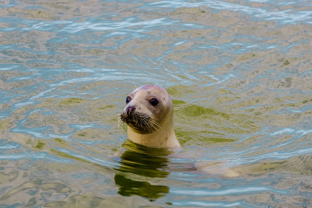 things to do on Texel | observe sea lions