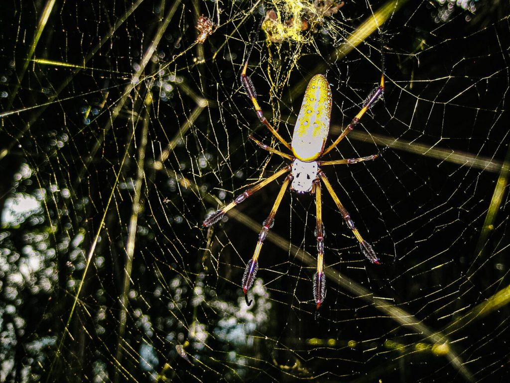 spider Petexbatun - off the beaten track travel tips Guatemala