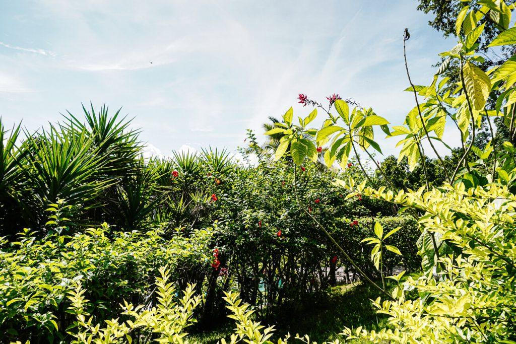 green surroundings of Peten