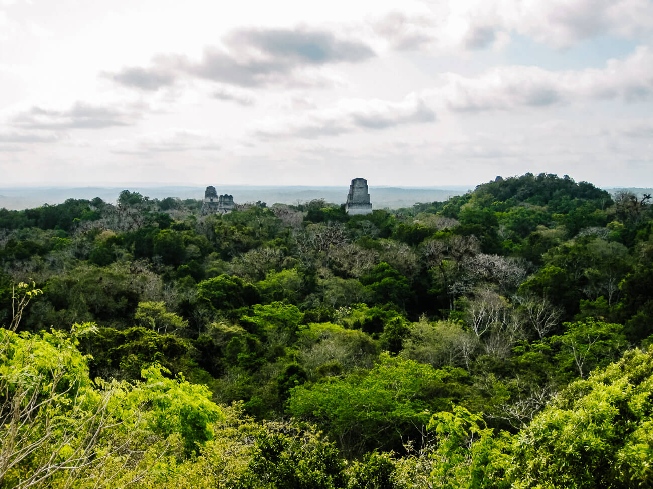 view of Tikal | during a tikal day tour
