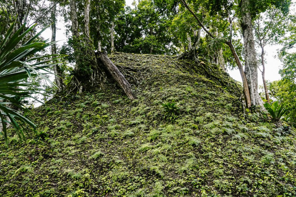 twin pyramids under vegetation to see during a day trip to tikal